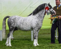 Section A Reserve Pendock Paigeboy